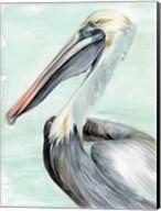 Turquoise Pelican II Fine-Art Print