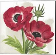 Crimson Anemones I Fine-Art Print