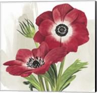 Crimson Anemones II Fine-Art Print