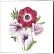 Anemone Blooms I Fine-Art Print