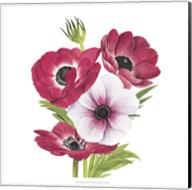 Anemone Blooms II Fine-Art Print