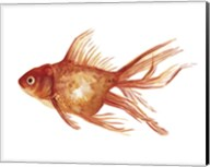 Ornamental Goldfish I Fine-Art Print