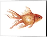 Ornamental Goldfish II Fine-Art Print