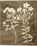 Botanical in Taupe I Fine-Art Print