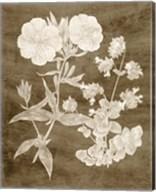 Botanical in Taupe II Fine-Art Print