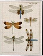 Dragonfly Study II Fine-Art Print