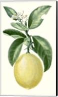 Fruit I Fine-Art Print