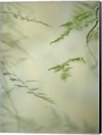 Soft Adagio 1 Fine-Art Print