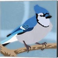 Majestic Blue Jay Fine-Art Print