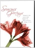 Holiday Amaryllis 1 Fine-Art Print