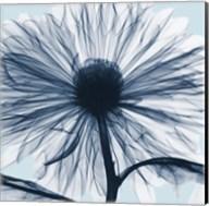 Chrysanthemum Blues Fine-Art Print