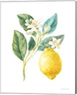 Floursack Lemon I on White Fine-Art Print