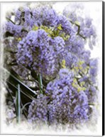 Wisteria Clouds Fine-Art Print