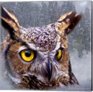 Winter Owl Fine-Art Print
