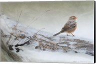 Snowscape Wc Sparrow Fine-Art Print