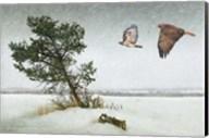 Lone Tree Redtail Hawks Fine-Art Print