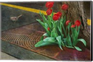 Sparrow,Tulips And Sidewalk Fine-Art Print