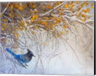 Snowy Branches Stellar Jay Fine-Art Print