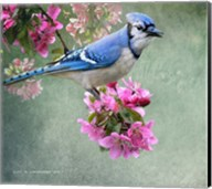 Bluejay Amid Blooms Fine-Art Print