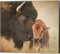 Bison Mother And Calf Fine-Art Print