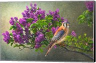 Lilac Branch Kestrel Fine-Art Print