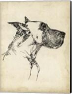 Breed Studies IV Fine-Art Print