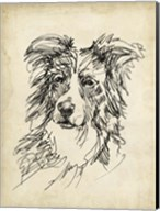 Breed Studies V Fine-Art Print