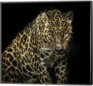 Angry Jaguar Fine-Art Print