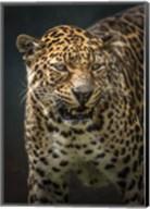 Angry Jaguar 2 Fine-Art Print
