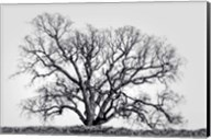 Grand Oak Tree I Fine-Art Print