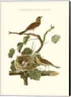 Nozeman Common Teal Nest Fine-Art Print