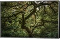 Maple Tree Fine-Art Print