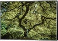 Maple Tree 3 Fine-Art Print