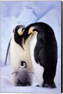 Penguin Family Portrait Fine-Art Print