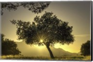 Sunburst Through a Tree Los Angeles Fine-Art Print