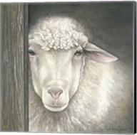 Farm Animal - Sheep Fine-Art Print
