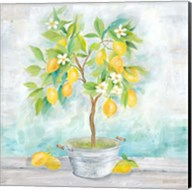 Country Lemon Tree Fine-Art Print