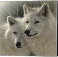 Wolves - Sunlit Soulmates Fine-Art Print