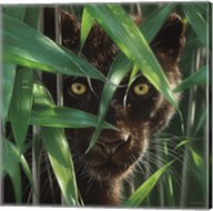 Black Panther - Wild Eyes Fine-Art Print