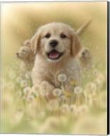 Golden Retriever Puppy - Dandelions Fine-Art Print