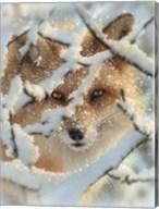 Red Fox - Hide and Seek Fine-Art Print