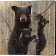 Black Bear Mother and Cubs - Mama Bear Fine-Art Print