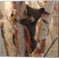 Curious Cub II Fine-Art Print