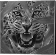 Jaguar - Ambush - B&W Fine-Art Print