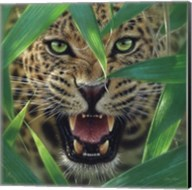 Jaguar - Ambush Fine-Art Print