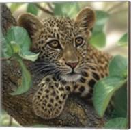 Leopard Cub - Tree Hugger Fine-Art Print