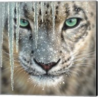Snow Leopard - Blue Ice Fine-Art Print