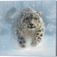 Snow Leopard - Snow Ghost Fine-Art Print