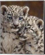 Snow Leopard Cubs - Playmates Fine-Art Print