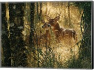 Whitetail Deer - A Golden Moment - Horizontal Fine-Art Print